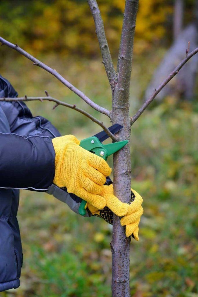 Rez a strihanie stromov odbornou rukou